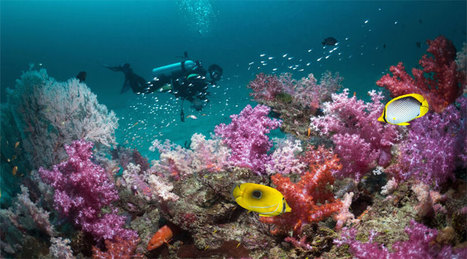 Famous Tourist Places in Andaman and Nicobar Islands | Indian Honeymoon Packages | Scoop.it