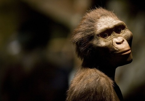 Where did we come from? A primer on early human evolution | Aux origines | Scoop.it