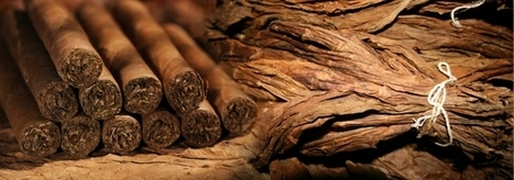 Davidoff Cigars Online   Wholesale/Discount   Tobacco Products   Scoop.it