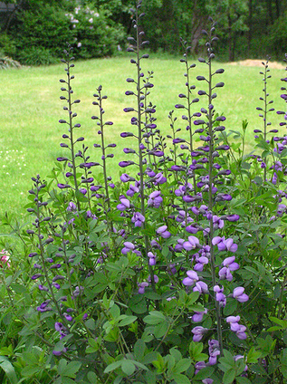 Native Plant Movement History   Annie Haven   Haven Brand   Scoop.it