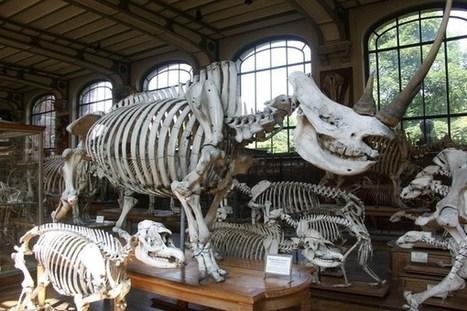 Mort des réseaux sociaux : pourquoi les paléontologues du web ont tort ? | Reseaux Sociaux et Entreprises | Scoop.it