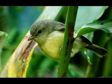 Thriving Illicit Trade Affecting Jamaica's Birds | All Things Zygodactyl | Scoop.it
