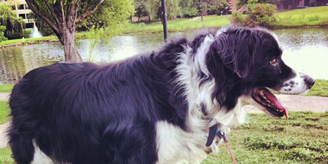 What 'Difficult' Dogs Can Teach Us - Huffington Post | All Things Dog | Scoop.it