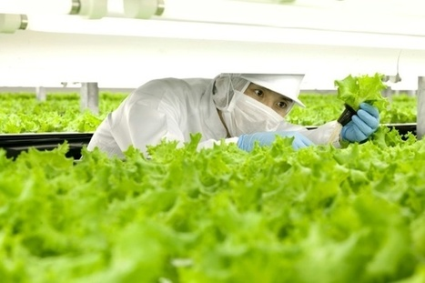 World's first 'robot run' farm to open in Japan | Farming, Forests, Water & Fishing (No Petroleum Added) | Scoop.it