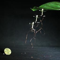 Using static electricity, RoboBees can land and stick to surfaces | Harvard John A. Paulson School of Engineering and Applied Sciences | Amazing Science | Scoop.it