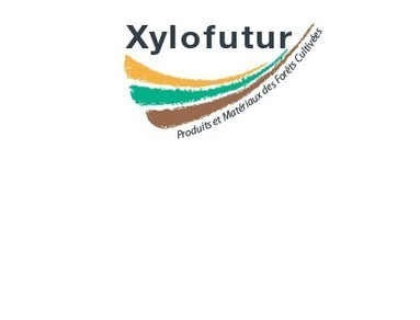 XyloDating - Jeudi 19 Mars 2015 - Lacq-Orthez – 64 | Xylofutur – Produits et Matériaux des Forêts Cultivées | creative process for innovative products | Scoop.it