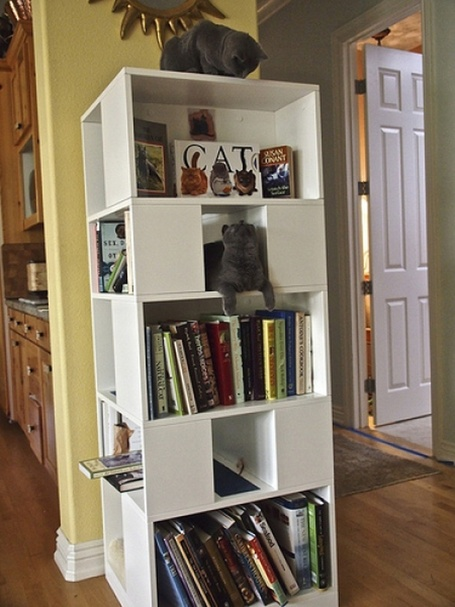 The CatCase: a Bookcase and a Ideal Playground for Your Cat | LibraryLinks LiensBiblio | Scoop.it