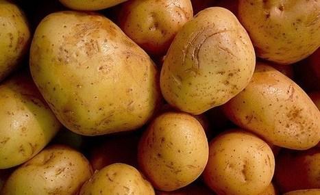 """En Grèce, le """"Mouvement de la patate"""" rapproche consommateurs et producteurs   Terroir   Scoop.it"""