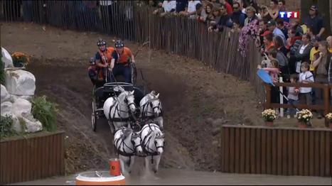 Le Journal du week-end - Equitation : les meilleurs mondiaux de l'attelage de poneys réunis à Pau   Cheval et sport   Scoop.it