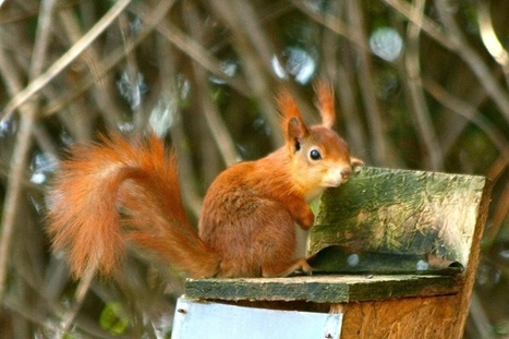 These Squirrels Are Carrying A Deadly Strain Of Human Leprosy | ONE HealthCare Worldwide | Scoop.it