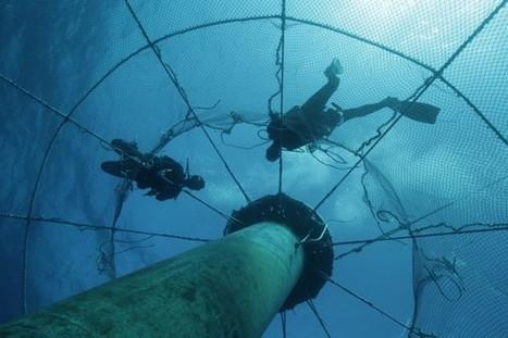Can New Shark-Resistant Nets Spur Responsible Aquaculture? | Amocean OceanScoops | Scoop.it