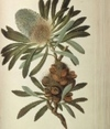 Superstars of botany: Rare specimens | Herbaria | Scoop.it