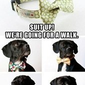 We're Going for a Formal Walk | HUMOUR WTF,BUZZ VIDEO & MEMES... | Scoop.it