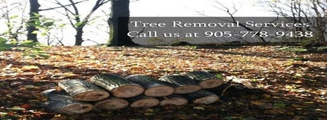 Timber Lane Tree Services   Tree Removal   Scoop.it