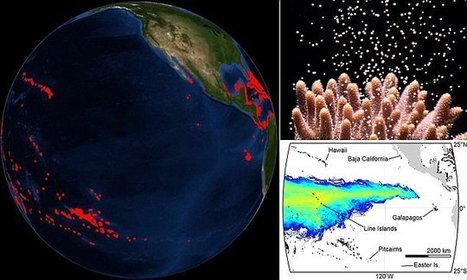Coral reefs in East Pacific are 'isolated' from the rest of the ocean | KNOWING............. | Scoop.it