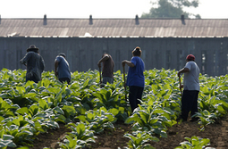 US: Sexual Violence, Harassment of Immigrant Farmworkers | Human Rights Watch | Help and Support everybody around the world | Scoop.it
