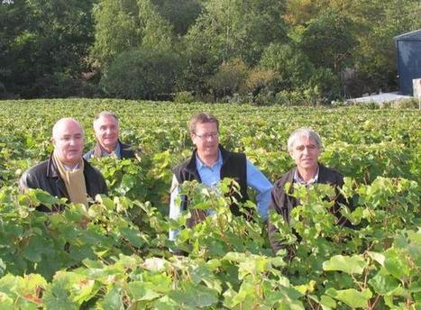 L'État reste à l'écoute des vignerons sinistrés. | Verres de Contact | Scoop.it