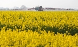#evil #Syngenta seeks 'emergency' exemption to use banned #insecticide on #UK crops | Messenger for mother Earth | Scoop.it