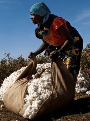 Chinese companies to grow one million feddans of cotton in Sudan | Identités de l'Empire du Milieu | Veille géographique | Scoop.it