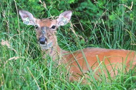 State records show gaps in oversight of captive deer farms, ranches - Columbia Missourian | Wildlife In The U.S. and Canada | Scoop.it