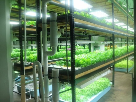 Aquaponics Farming Business Expands in the Twin Cities and Revitalizes Neighborhoods – The Global Grid | Vertical Farm - Food Factory | Scoop.it