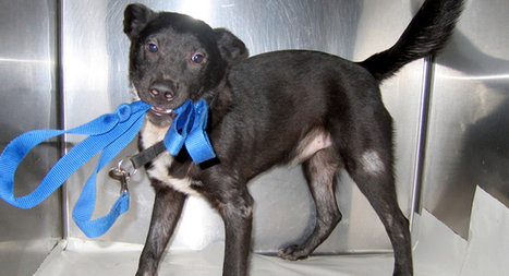 Help the Animals Fund > Home   About animals   Scoop.it