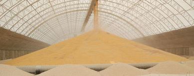 Vilsack: China to Lift Ban on Syngenta's GMO Corn Trait MIR 162   MAIZE   Scoop.it