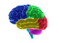 IT HAPPENS IN THE BRAIN AND IT BEGINS EARLY!   Early Brain Development   Scoop.it