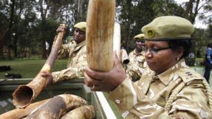 Kenyan Anti-Poaching Laws May Get Overhaul | Rhino poaching | Scoop.it