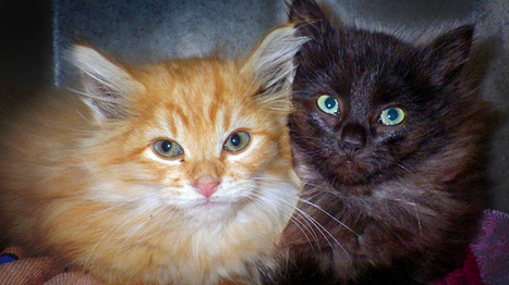 Kittens who survived being thrown from car at freeway speeds have died, reward offered in case | CUTE | Scoop.it