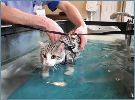 L'arthrose du chat : comment la détecter et la traiter ? - Wamiz | Chiens et Chats ! | Scoop.it