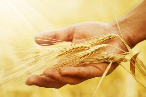 Alimentation : on se met enfin à regarder les étiquettes des produits | Des 4 coins du monde | Scoop.it