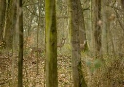 Préservation du bois deMaroeuil - La  mécanique des sons   DESARTSONNANTS - CRÉATION SONORE ET ENVIRONNEMENT - ENVIRONMENTAL SOUND ART - PAYSAGES ET ECOLOGIE SONORE   Scoop.it