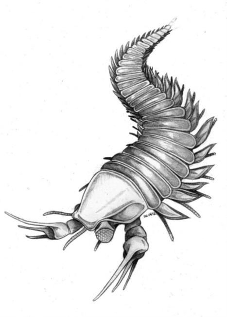 Les plus grandes découvertes de nouvelles espèces en 2013 (2/2) | EntomoNews | Scoop.it