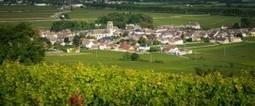 Les prix des terrains en Bourgogne viticole atteignent des sommets | Le vin quotidien | Scoop.it