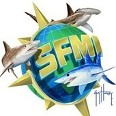 Shark Friendly Marinas | Shark conservation | Scoop.it