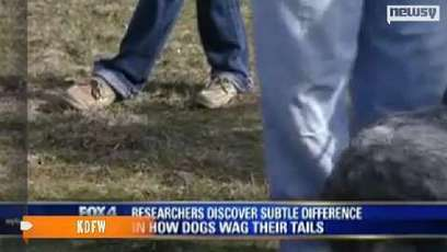 """What your dog's wagging tail really means 