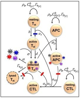 HIV Plays (and Wins) a Game of T Cell Brinkmanship | Virology and Bioinformatics from Virology.ca | Scoop.it