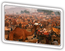 Golden Triangle Tour With Ajmer and Pushkar | Golden Triangle Packages | Scoop.it