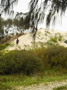 Dunes   Year 11 Biology - Moreton Bay Field Report   Scoop.it