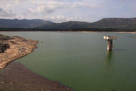 Corse : des micro-algues toxiques découvertes à Codole   Toxique, soyons vigilant !   Scoop.it