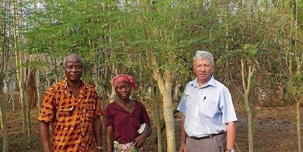 Gard : le moringa, un arbre qui pourrait dépolluer la Camargue | Cameroun Tourisme, cultures et nature | Scoop.it