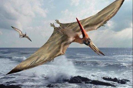 La France envisage à nouveau d'acheter des drones américains Predator | 694028 | Scoop.it
