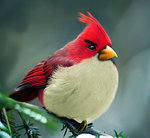 Natural angrybird boomerang by =mohamedraoof on deviantART | Angry Birds | Scoop.it