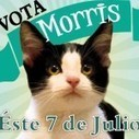 Can Morris the Cat Become a Mayor in Mexico? | Trending News Stories | Scoop.it