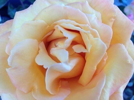 Brands N' Roses: The Memorable Brand Experience - Martha Spelman | MoreMarketing | Scoop.it