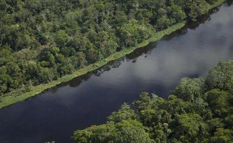 La forêt du Pérou en état d'urgence | Communication de crise & gestion des risques | Scoop.it