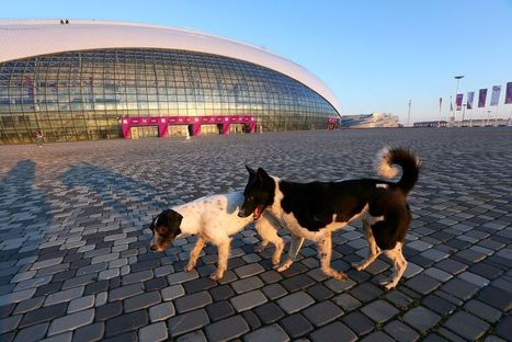 Stray Dogs in Sochi: What Happens to the World's Free-Roaming Canines? | Animal Cruelty | Scoop.it
