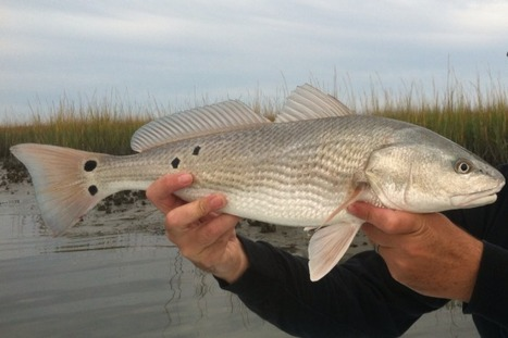 Get Hooked Fishing School March 8 at NC Aquarium at Pine Knoll Shores | Boating in NC | Scoop.it