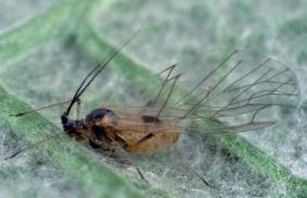 Insectes de l'artichaut   Les colocs du jardin   Scoop.it